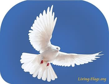 white dove blue heaven